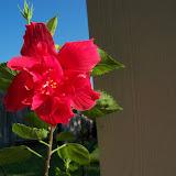 Gardening 2015 - 100_0521.JPG