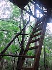 千年の森自然学校