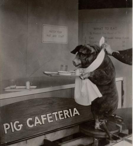 Pig%20CAfeteria