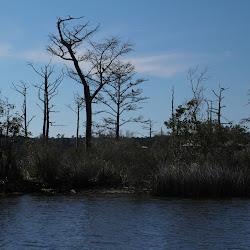 Fowl Marsh from Boat Feb3 2013 220