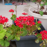 Gardening 2012 - 115_1419.JPG