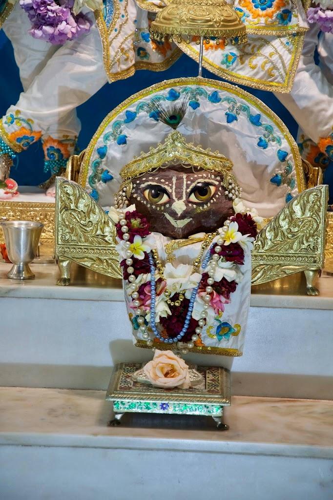 ISKCON New Govardhan Deity Darshan 08 Dec 2016 (3)