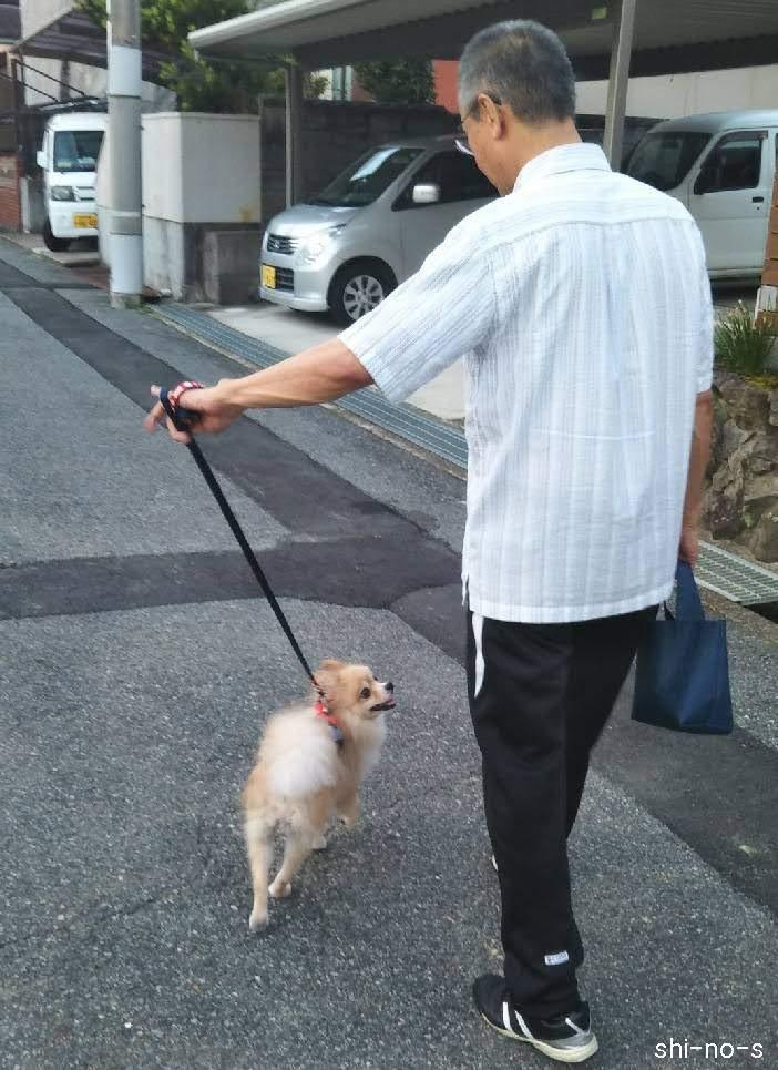 ミミと父が散歩しているシーン