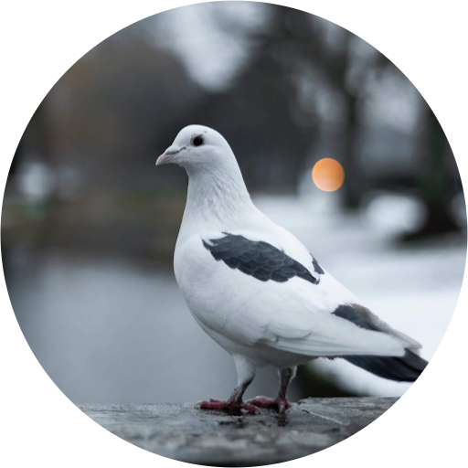 Bird Shop In Ajman