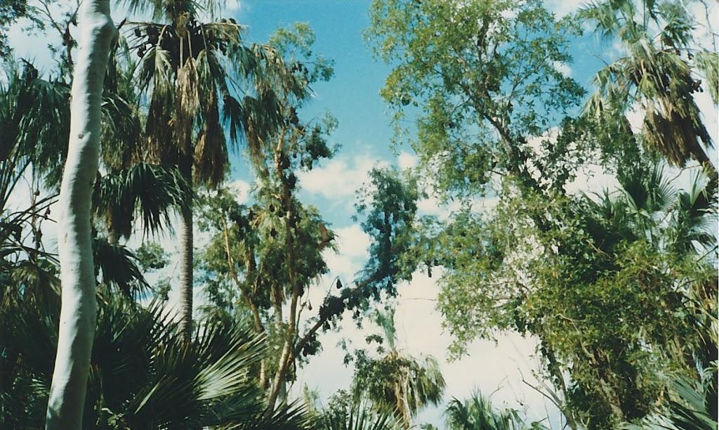 1320Mataranka Springs