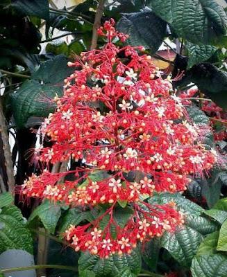 Bunga pagoda