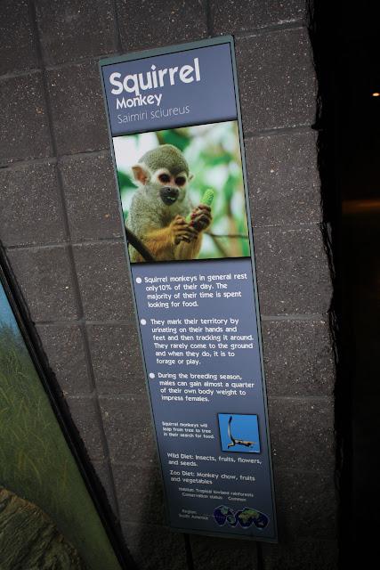 Zoo Snooze 2015 - IMG_7308.JPG