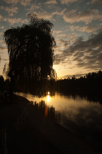 05-05-2008_willowatsunset_wm.jpg