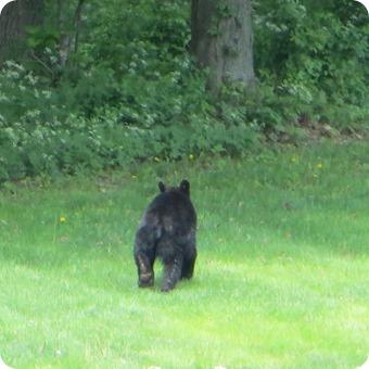 Mountainville Bear