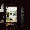 Balcony cow.jpg