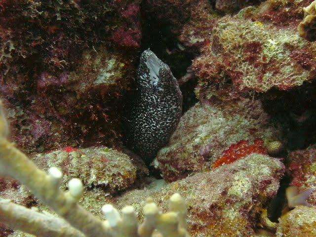 Bonaire 2011 - PICT0213.JPG