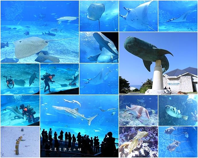 10 日本沖繩五天四夜租車自由行 美麗海水族館