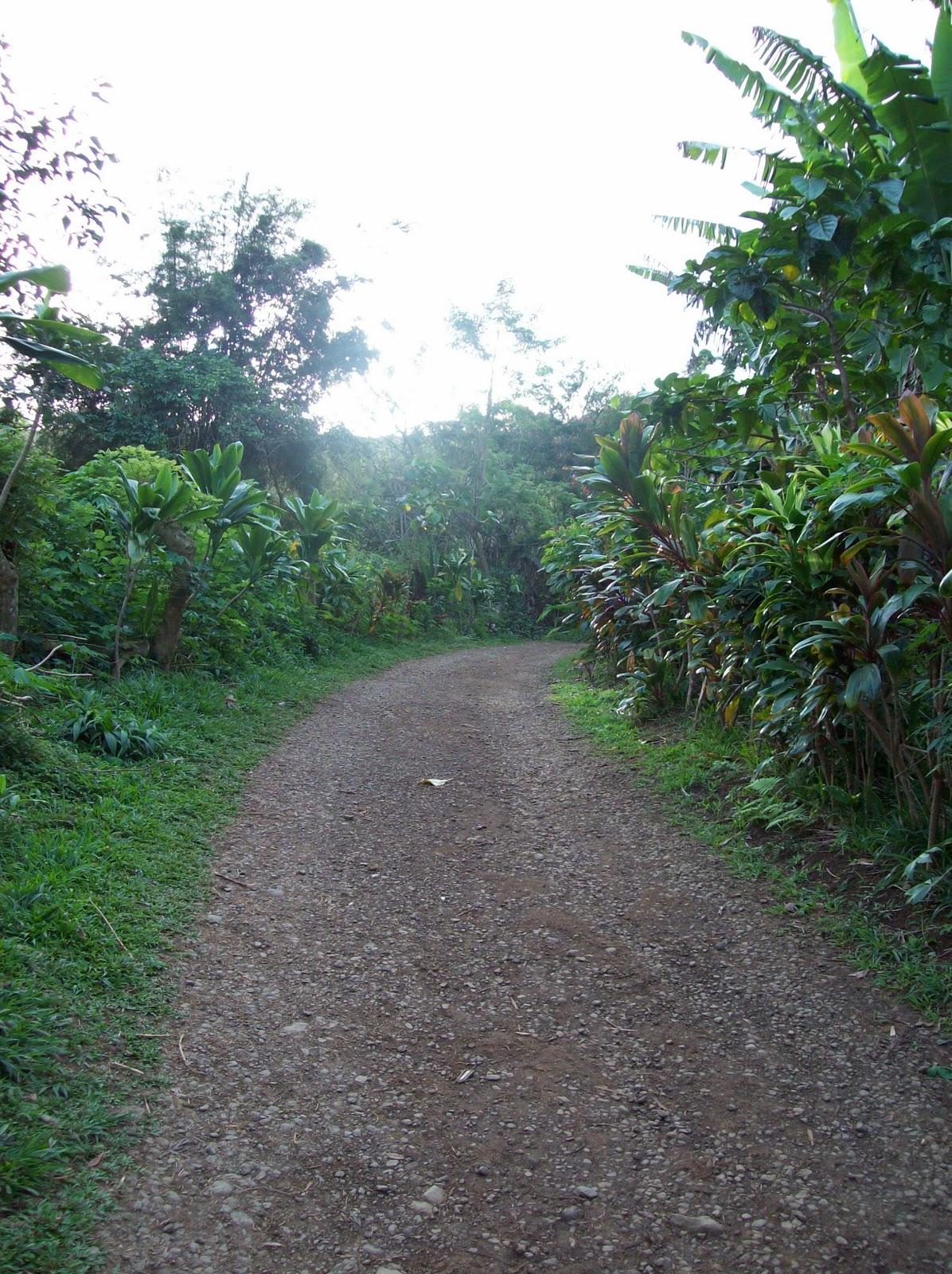 Hawaii Day 5 - 114_1381.JPG
