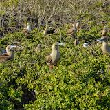 galapagos - Galapagos_FB_2-80.jpg