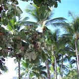 Hawaii Day 2 - 100_6733.JPG