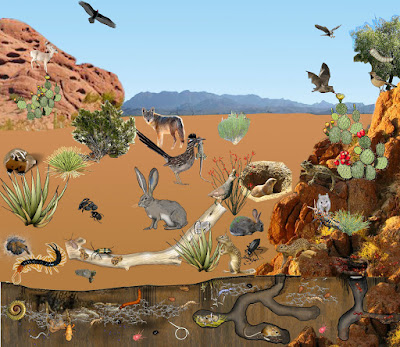 Day 21 Ecosystems And Biomes David Bird Science