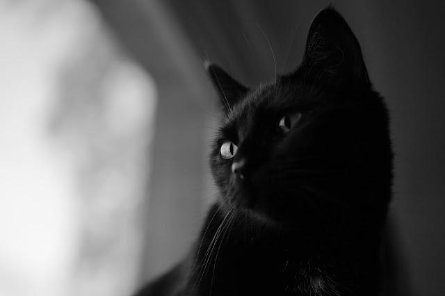 H.P Lovecraft's Cat Name