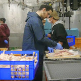 Chabad Japan kashering chickens.jpg
