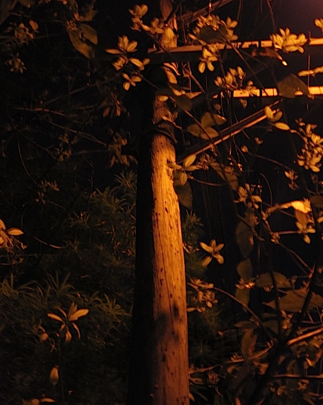 utility pole made out of a whole tree trunk
