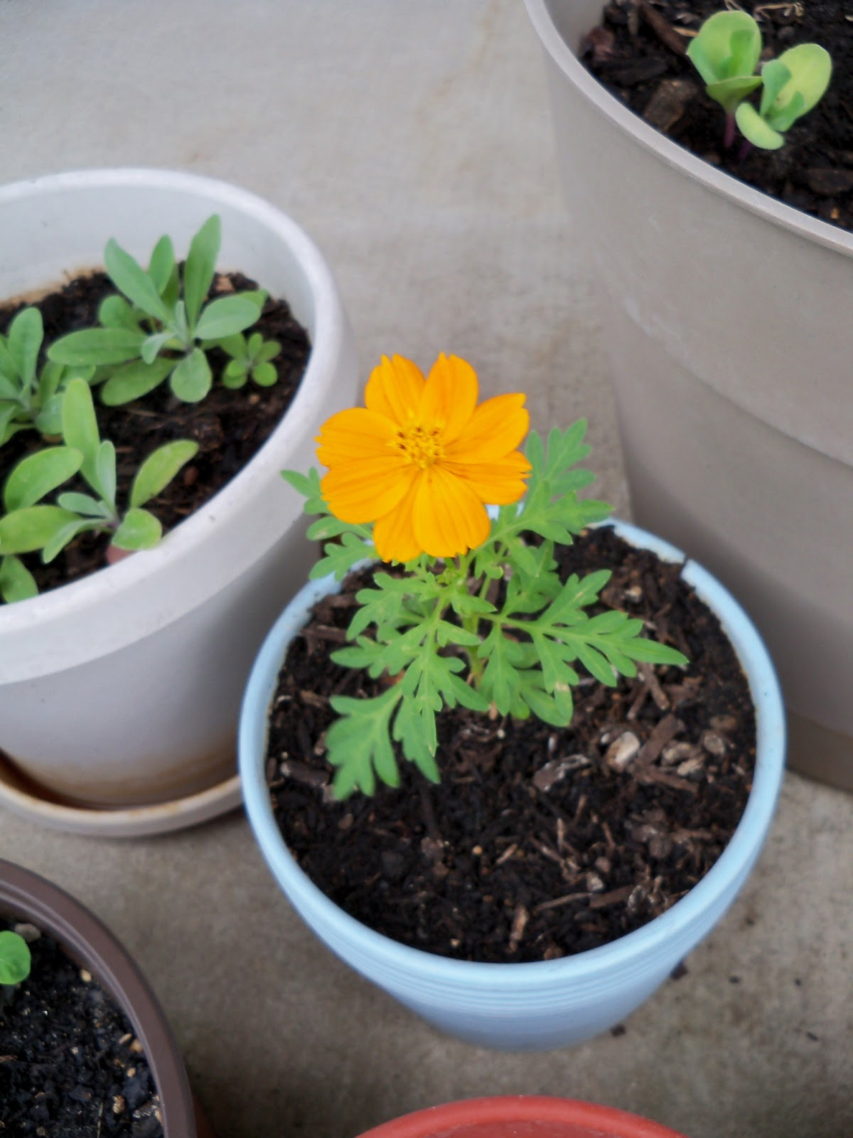 Gardening 2011 - 100_8062.JPG