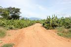 Take a walk thru Banana Plantation