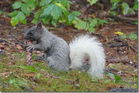 chippewa_falls_lake_wissota_squirrel1