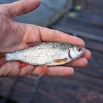 20140517_Fishing_Bochanytsia_008.jpg