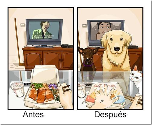 antes y despues de tener   perro (8)