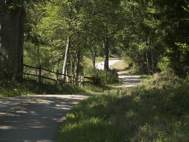 slingrande skogsvg vid vng