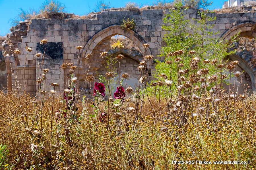 Рамле, руины возле Белой мечети. Гид экскурсовод в Израиле Светлана Фиалкова.