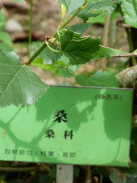 étiquette verte = teinture verte