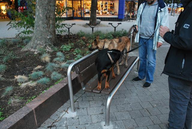 KNON-honden in Emmen - DSC_0812.JPG