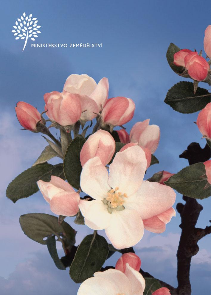 kvet_001-1