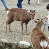 2014 Japan - Dag 8 - mike-P1050690-0225.JPG