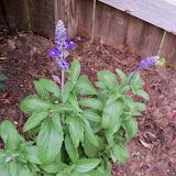 Gardening 2014 - 116_1745.JPG