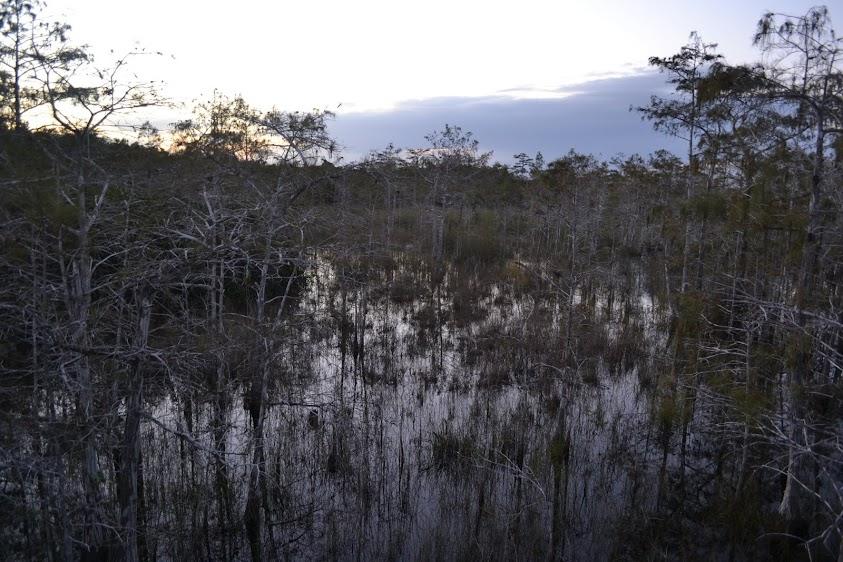 Национальный парк Эверглейдс, Флорида (Everglades National Park, FL)