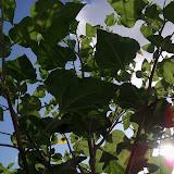 Gardening 2012 - 115_2857.JPG