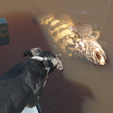 Lola and the Goliath Grouper.jpg