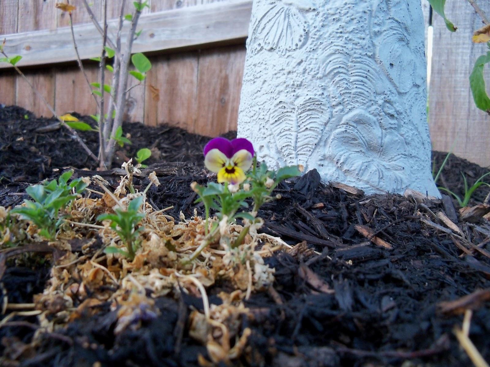 Gardening 2011 - 100_6752.JPG
