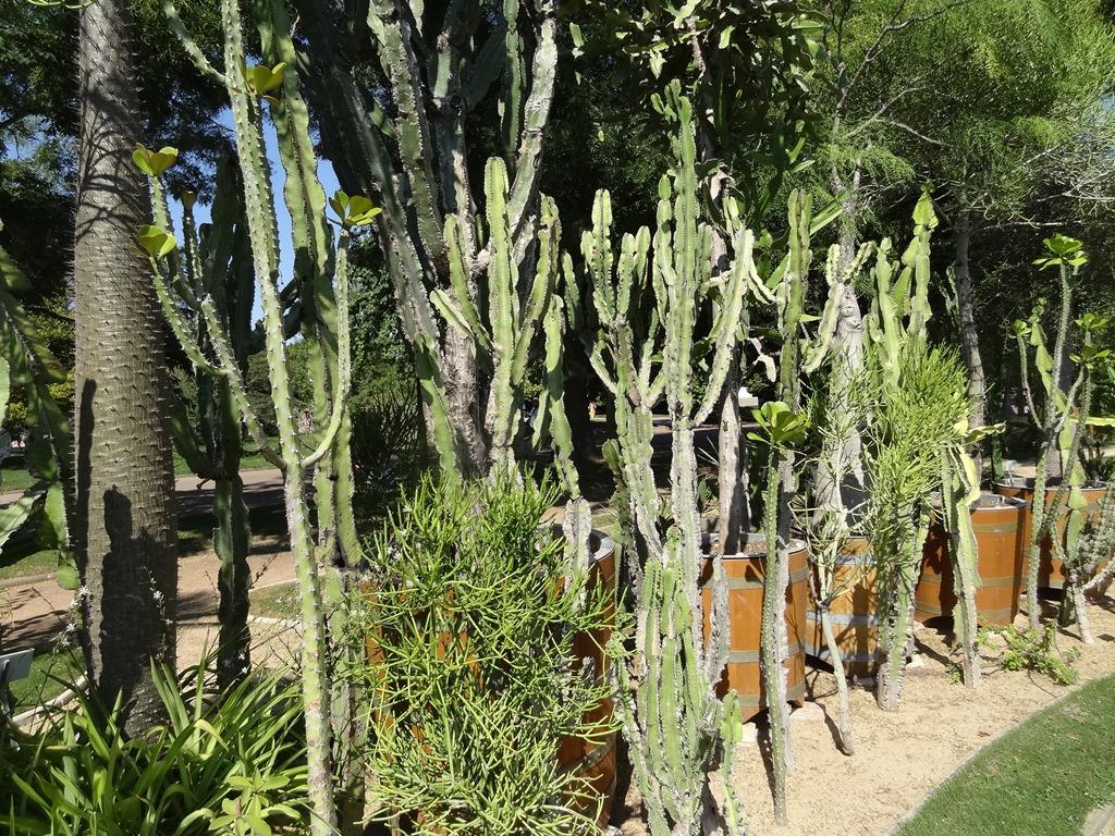 [2018.08.21-027-cactus4]