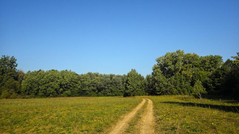 Дорога через Суський ботанічний заказник