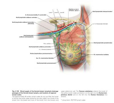 Anatomi Fisiologi Payudara ( Mammae) Pada Tubuh Manusia
