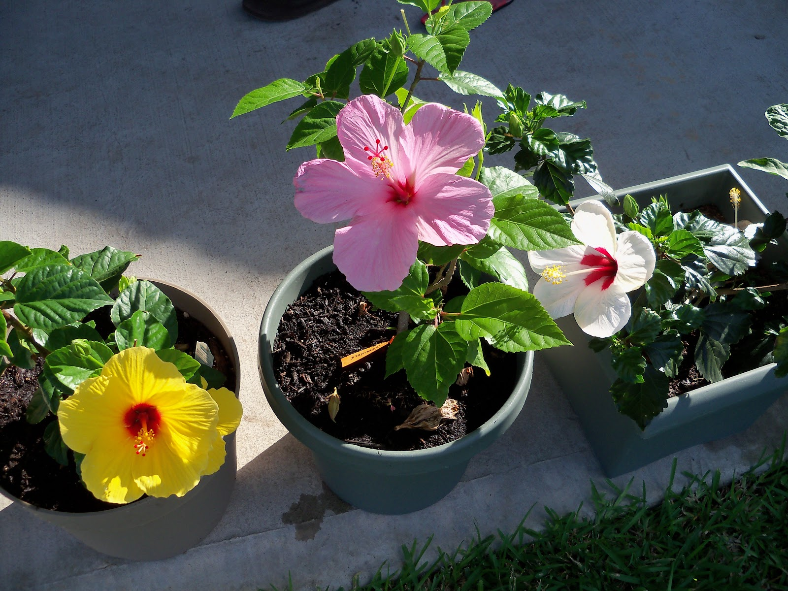 Gardening 2010, Part Two - 101_2515.JPG