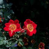 Gardening 2011 - 100_8590.JPG