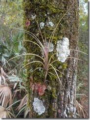 Bark ecosystem-1