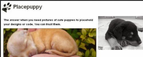 placepuppy