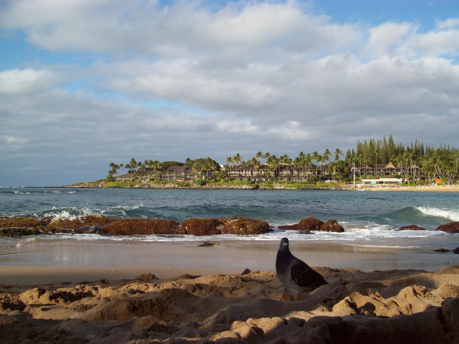 Hawaii Day 7 - 100_7958.JPG