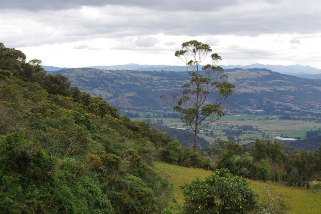 La Trinidad, 3000 m (Guasca, Cundinamarca, Colombie), 12 novembre 2015. Photo : J.-M. Gayman