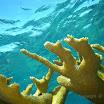 Buck Island Reef - IMGP3910.JPG