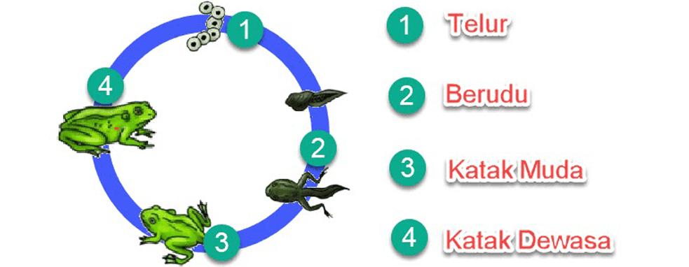 Kunci Jawaban Halaman 40, 41, 42, 46 Tema 5 Kelas 5